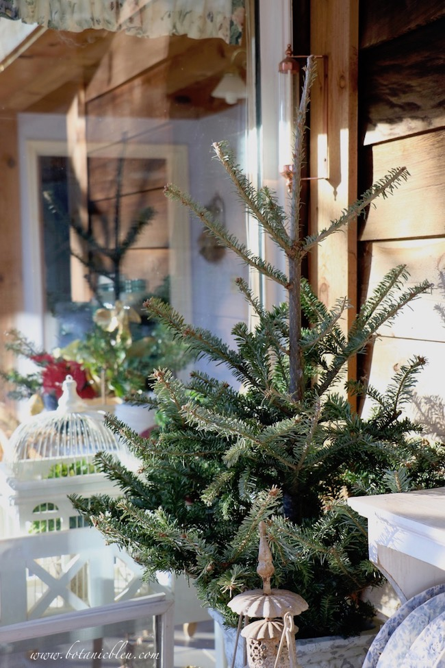 Small table top Christmas trees visible through windows