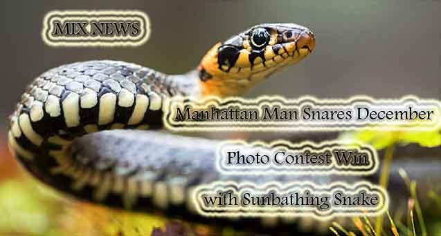Manhattan Man,Snares,December,Sunbathin,Snake