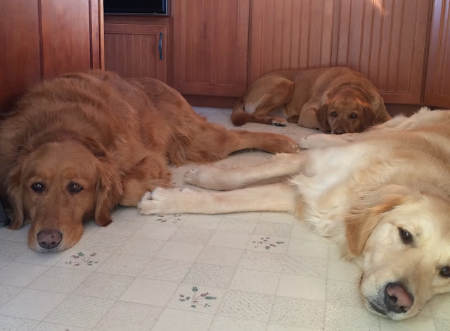 Three dogs on kitchen floor National Dog Day
