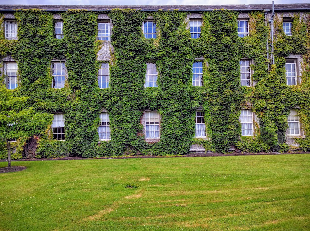 Best Dublin Walks: Ivy covered building at Maynooth University