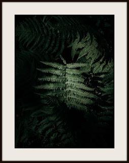 plakat, plakat z paprocią, plakat z paprotką, plakat z paprocią leśną, plakat leśny, plakat z roślinami, plakat roślinny, plakat pionowy, plakat pionowy A3
