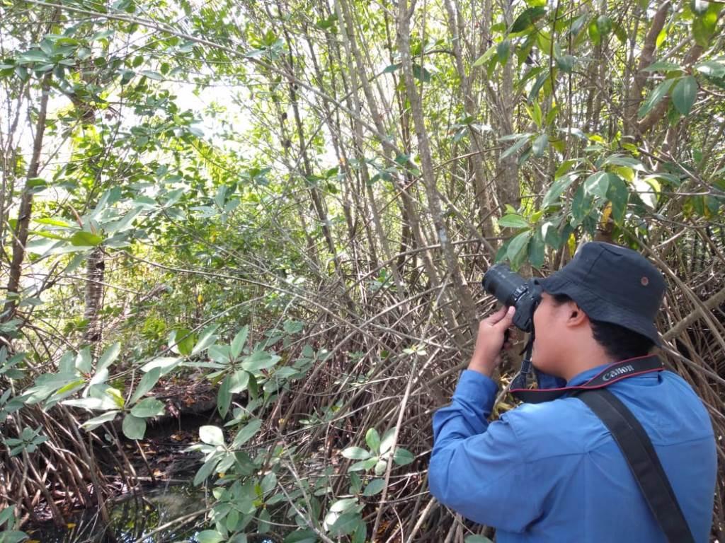 Bidik Pesona Keindahan Mangrove, IKAMaT Garap Buku Mangrove Cilacap