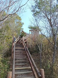 木道を登る