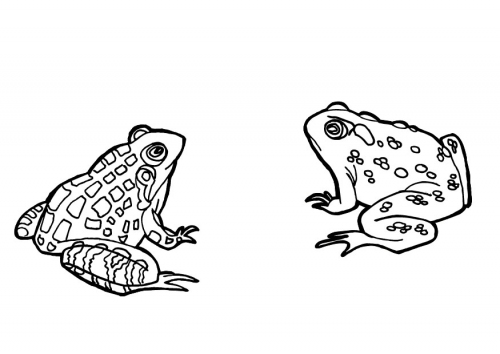 Ranas para colorear - Dibujos para Colorear y Pintar Gratis