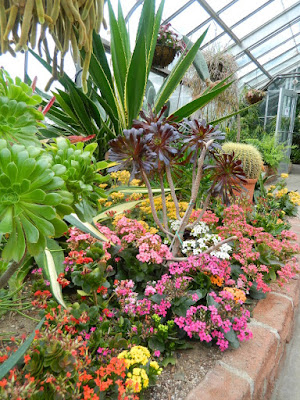 Etobicoke's Centennial Park Conservatory's Arid House blooms by garden muses-not another Toronto gardening blog