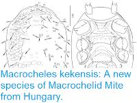 https://sciencythoughts.blogspot.com/2018/06/macrocheles-kekensis-new-species-of.html