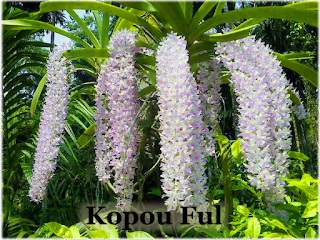 State Flower of Assam : Kopou Ful