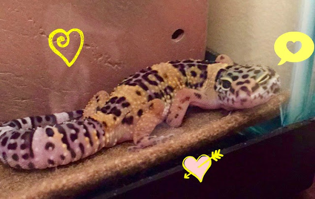 Kazooie the gecko
