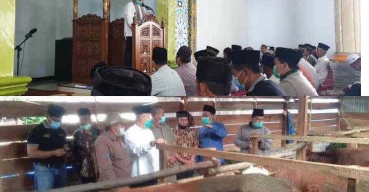Bupati Kerinci Safari Jumat di Masjid Kayu Aro Sekaligus Kunjungi Penggemukan Sapi