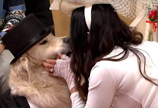 British model went on live on television to wed her dog | stuns people