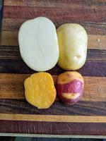 Amiah diploid potato