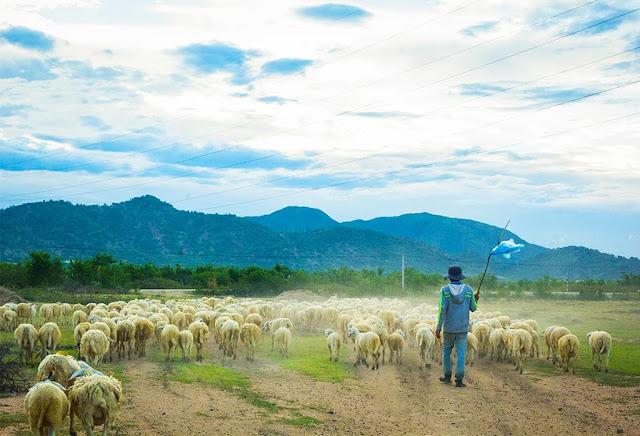 Cuộc sống du mục ở Đồng cừu An Hòa