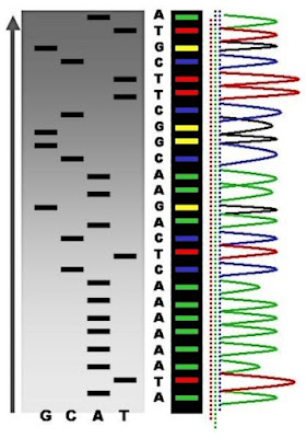 Discovering integration of viral vectors DNA into the host genome
