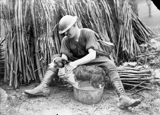 Circa 1918 Canadian soldier giving his dog a much needed wash (Linked)