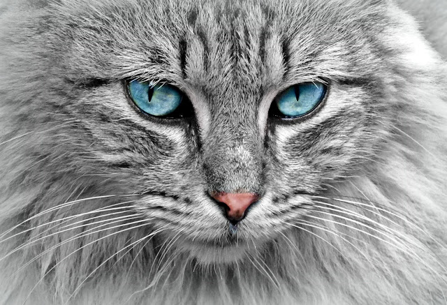 pets%2Babs - Here's How to Make Your Old Cat Feel Young Again