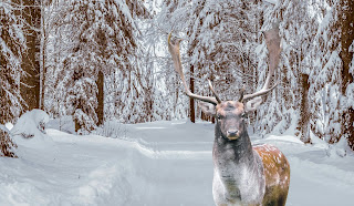 winter,deer, stag, animal,  , snow, scenic, landscape, cold, season, white, rural, country, road, outdoors, rustic, , nature, mammal, forest