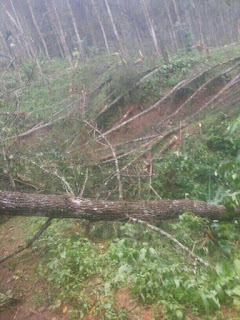 Hujan Es dan Angin Kencang Hantam Pasirkuda Cianjur, Jalan Padamulya Lumpuh