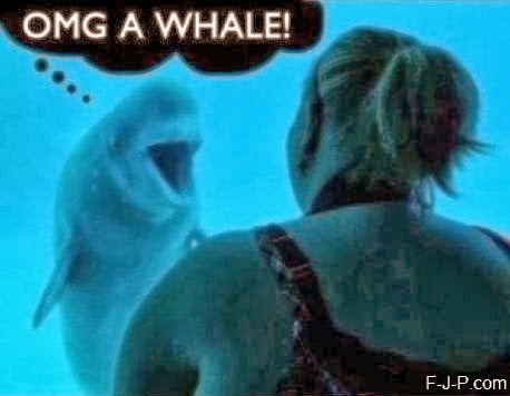 Funny Dolphin OMG Whale Joke Picture