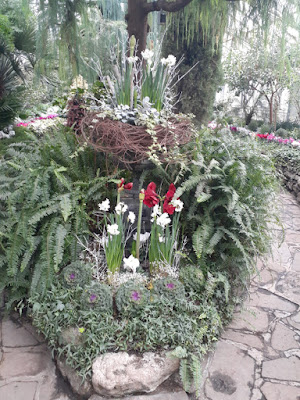 Allan Gardens Conservatory 2019 Winter Flower Show seven by garden muses--not another Toronto gardening blog