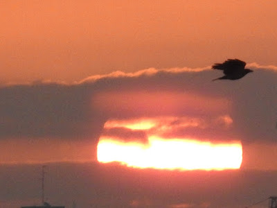 Sunrise and a crow