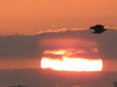 Sunrise and a crow