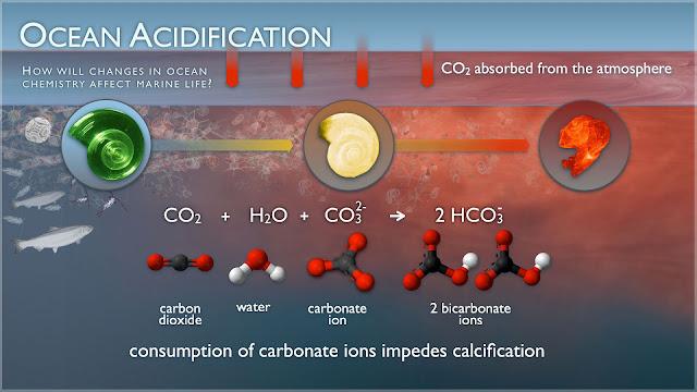 Ocean Acidification threat to marine life