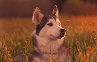 Hayvan Sevgisi - Güncel Hayvan Sevgisi Haberi ile ilgili aramalar hayvanlarla ilgili haberler  hayvan sevgisi anlamı  hayvan sevgisi ile ilgili yazı  hayvan sevgisi kompozisyon  ingilizce hayvan haberleri  hayvan sevgisi şiir  günümüzde hayvan sevgisi  çocuğun hayvan sevgisi ile ilgili sözler
