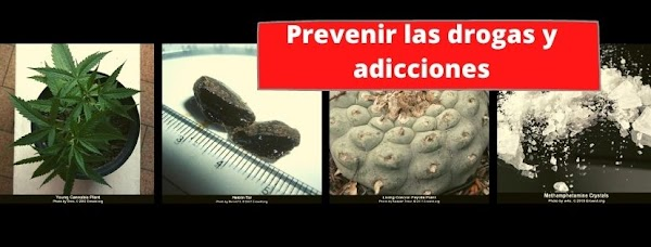 ▷ ¿Cómo funcionan las drogas y cómo prevenir las adicciones en mi comunidad?