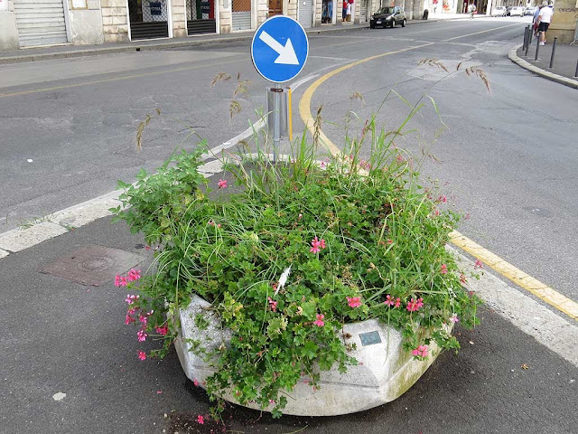 Neglected planter, via Grande, Livorno