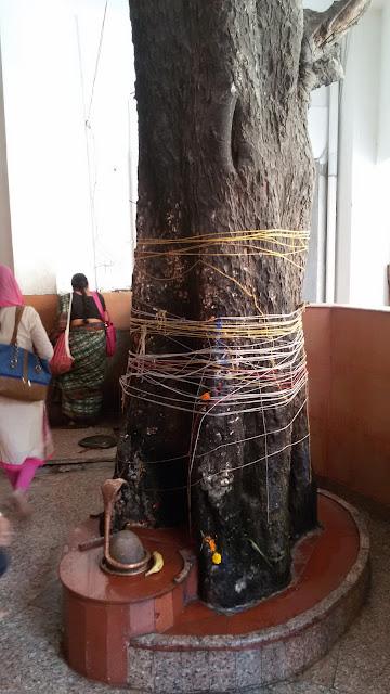 Bael Tree at Prithvi Nath Mahadev Mandir Dehradun