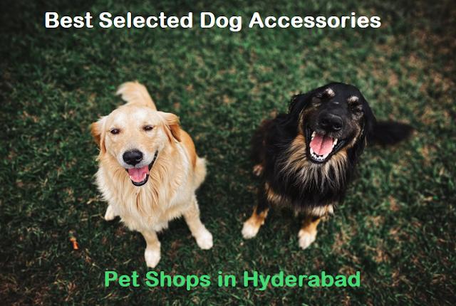 dog pet shops in hyderabad, hyderabad pet shops, pet shop near me hyderabad, ammu's pets & kennels hyderabad, pet shops in hyderabad kukatpally, pet shops in banjara hills hyderabad