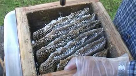 Τρύγος μελιού σε Ιαπωνικές κυψέλες