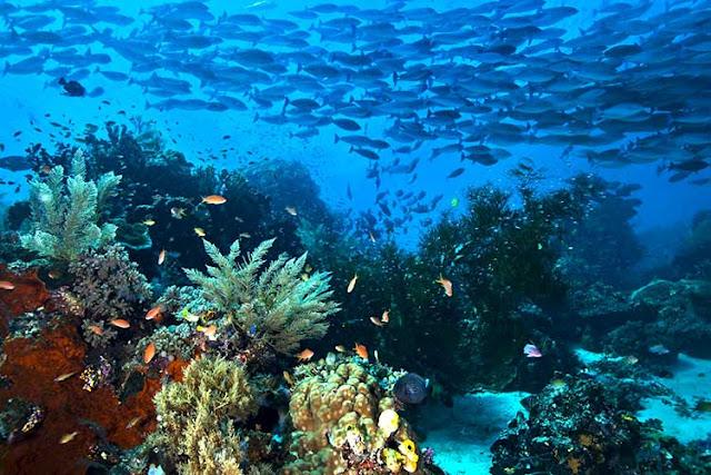 Ekosistem bawah laut Raja Ampat