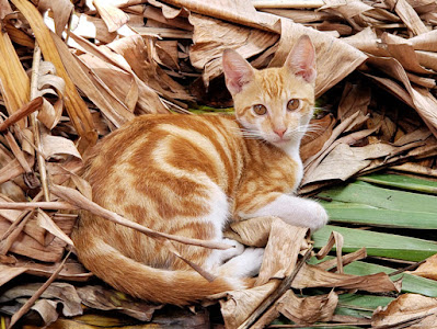 Marmalade cat on a bed of banana leaves