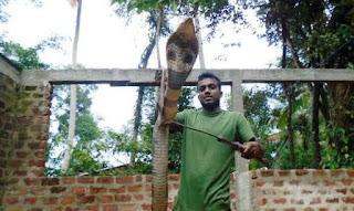 Dehiattakandiya Animal Lover Snake Lover