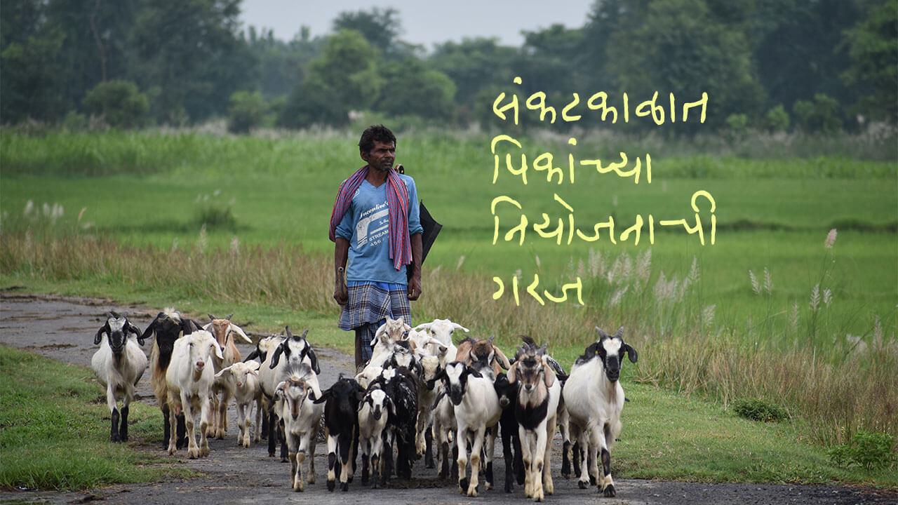 संकटकाळात पिकांच्या नियोजनाची गरज