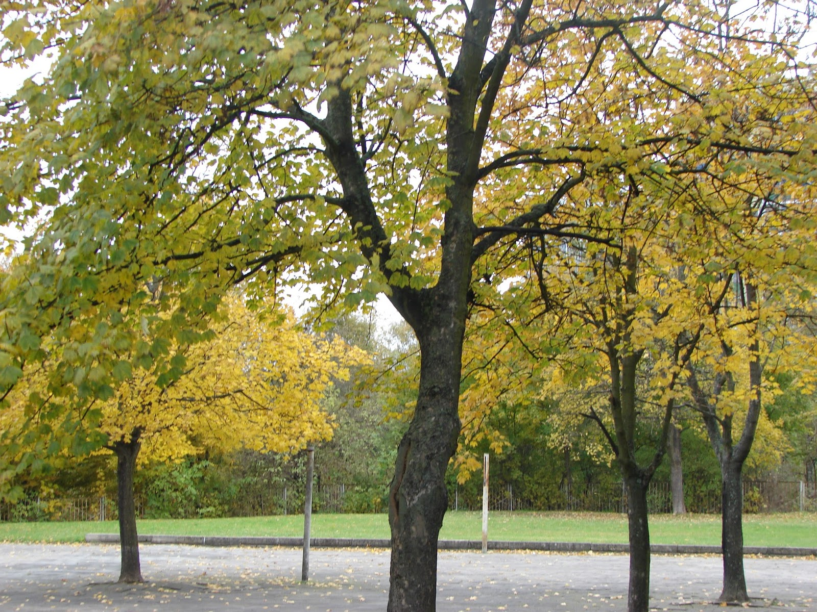 Wiersze Lekkim Piórem Pisane Kolory Jesieni