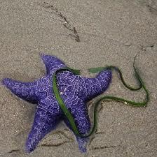 Bir Deniz Yıldızı Hikayesi 8