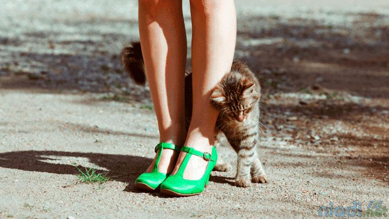 10 tanda kucing menyayangi kita