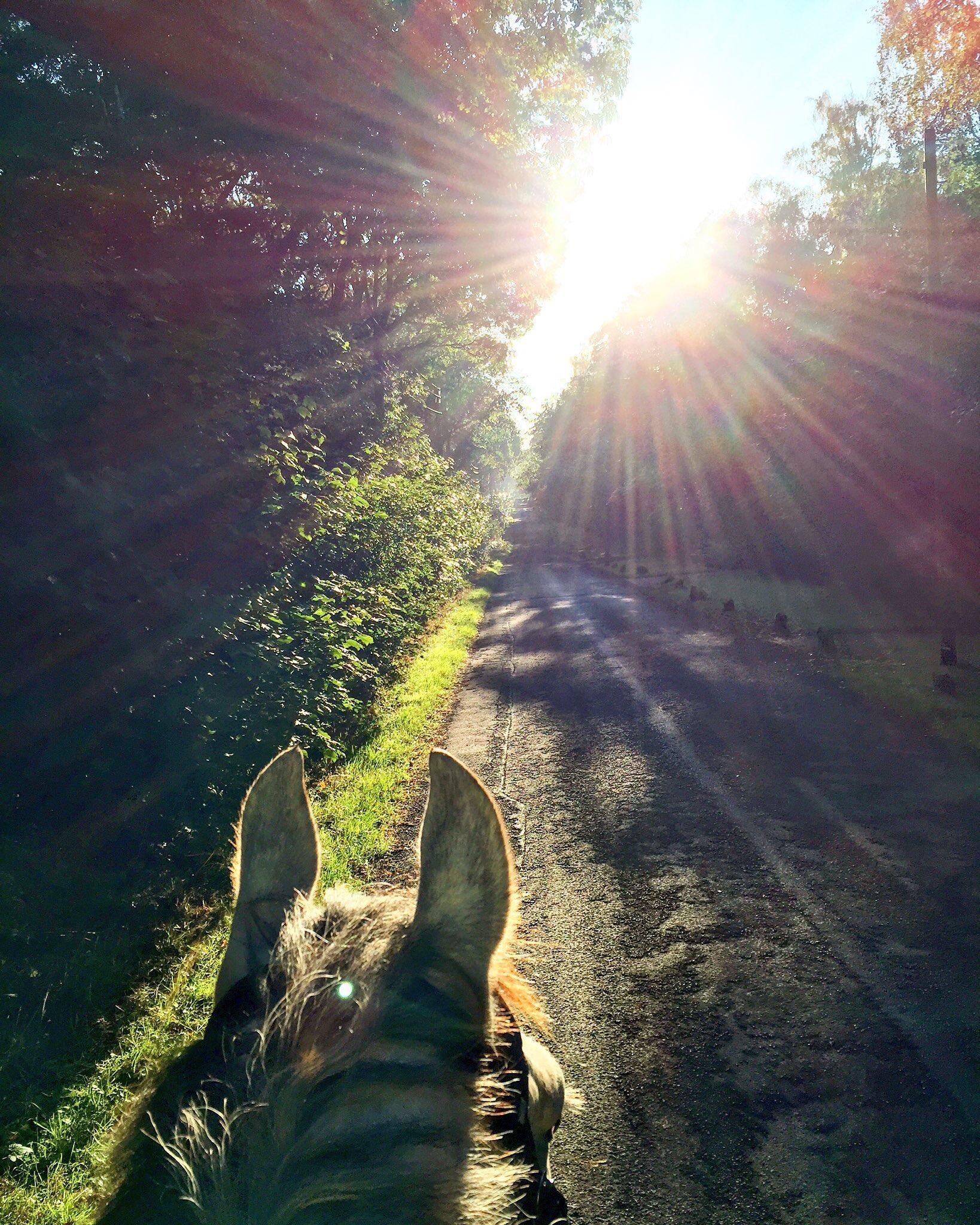 Team Tunnah Equestrian Autumn & Winter Horse Care