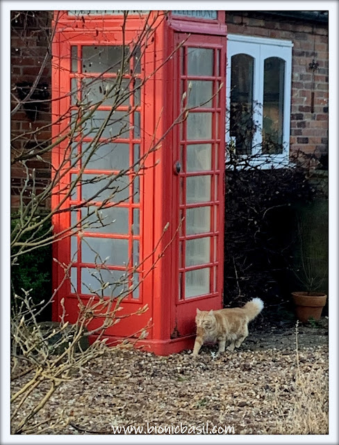 Fudge Calling Catline in TTTB aka Time Travelling Telephone Box ©BionicBasil® The Pet Parade 381