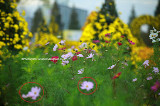 Tips Membuat Foto Blur/Bokeh