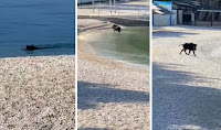 vepar Makarska slike otok Brač Online