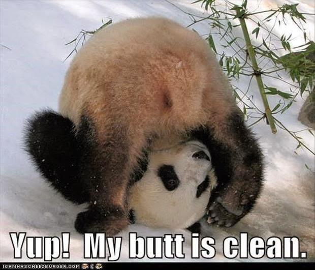 30 Funny animal captions - part 23 (30 pics)   Amazing Creatures