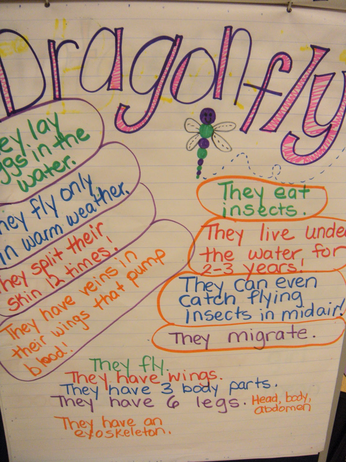 Peace Love And Kindergarten Dragonflies And Fireflies