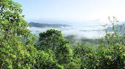 Yang dimaksud dengan hutan primer adalah hutan yang terbentuk secara alami tanpa terjamah manusia. Hutan sekunder adalah hutan bekas tebangan manusia.