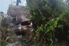 Pohon Jabi-Jabi Tumbang, Berdiri Kembali Tewaskan 1 Warga