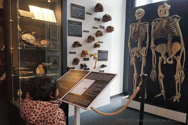Musee de la Medicine brussels