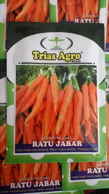 Benih Wortel Unggul RATU JABAR Produk Trias Agro Seed