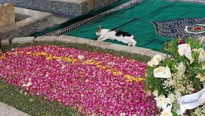 Viral Foto Kucing Piaraan Gus Sholah yang Bersedih dan Tidur di Makam